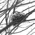 Bird nest in snow