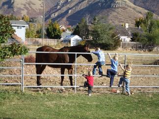 Pettingthehorse2